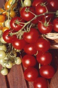 alles rund ums thema gr n und garten gartengestaltung tomaten pflanzen und. Black Bedroom Furniture Sets. Home Design Ideas