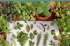 Kräuter ernten und konservieren