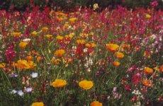 wildblumenmischungkiepenkerlteaser_teaser