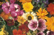 Kiepenkerl-Pflanzenzüchtung